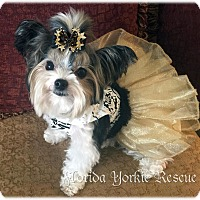Adopt A Pet :: Mollie Mae - Palm City, FL