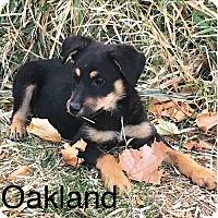 Adopt A Pet :: Oakland - Albuquerque, NM
