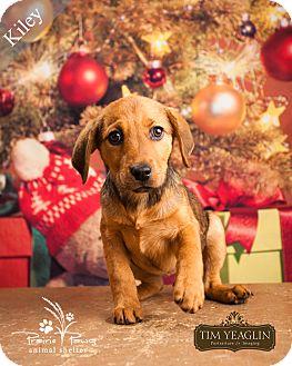 Labrador Retriever Mix Dog for adoption in Ottawa, Kansas - Kiley