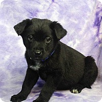 Adopt A Pet :: EARL - Westminster, CO