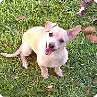 Adopt A Pet :: Dougie (P) - Santa Ana, CA