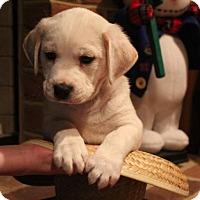 Adopt A Pet :: Herbie - Mechanicsburg, PA