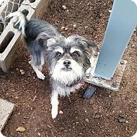 Adopt A Pet :: WOODSTOCK - Phoenix, AZ