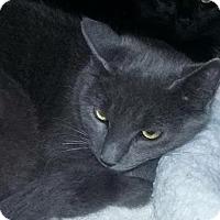 Adopt A Pet :: Tuesday - East Brunswick, NJ