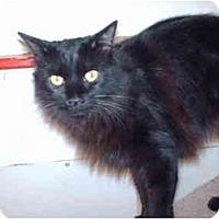 Adopt A Pet :: Mister - El Cajon, CA