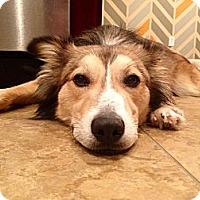 Adopt A Pet :: Hogan - Marietta, GA