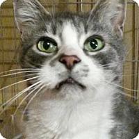 Adopt A Pet :: Norbie - Colfax, IA