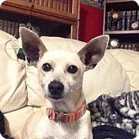 Adopt A Pet :: Peanut - Livermore, CA