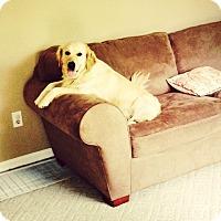 Adopt A Pet :: Jessie - BIRMINGHAM, AL