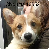 Adopt A Pet :: Chiquitta - baltimore, MD