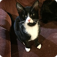 Adopt A Pet :: Cosmo - Morganton, NC