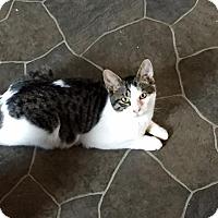 Adopt A Pet :: Saturday - Windsor, CT
