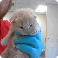 Adopt A Pet :: A271410 - Conroe, TX