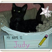 Domestic Shorthair Kitten for adoption in Iroquois, Illinois - Judy