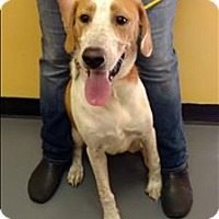Adopt A Pet :: 16-08-2537 Sam - Dallas, GA
