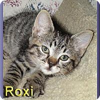 Adopt A Pet :: Roxi - Aldie, VA