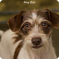 Terrier (Unknown Type, Small)/Terrier (Unknown Type, Medium) Mix Dog for adoption in Greensburg, Pennsylvania - Penny