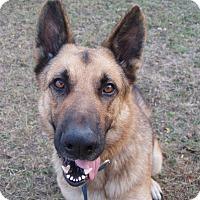 Adopt A Pet :: Titan - Dripping Springs, TX
