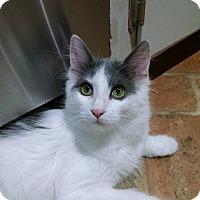 Adopt A Pet :: Fluffy - Ponchatoula, LA