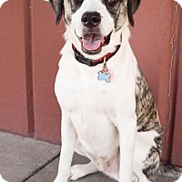 Adopt A Pet :: Huckleberry - DFW, TX