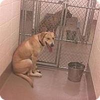 Adopt A Pet :: Rosie - Tunbridge, VT