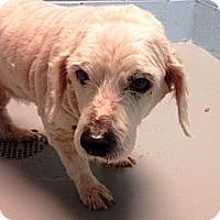 Adopt A Pet :: Armando - Muskegon, MI