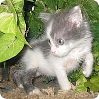 Adopt A Pet :: SG1 - Dallas, TX