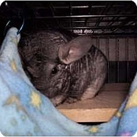 Adopt A Pet :: Mitzi - Avondale, LA