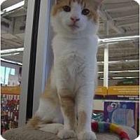 Adopt A Pet :: Kiano - Phoenix, AZ