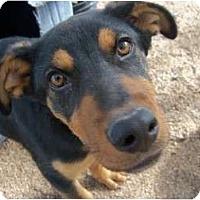 Adopt A Pet :: KONA - Glenpool, OK