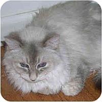 Adopt A Pet :: Thumbelina - Davis, CA