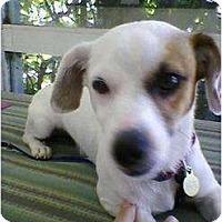 Adopt A Pet :: JACK - Malibu, CA