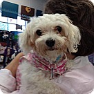 Adopt A Pet :: Kenzie