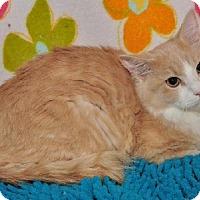 Adopt A Pet :: Tristan - Garland, TX