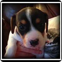 Adopt A Pet :: Bernadette - Indian Trail, NC