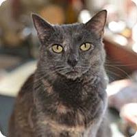 Adopt A Pet :: Trixie - Merrifield, VA