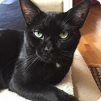 Adopt A Pet :: Cole - Merrifield, VA