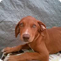 Adopt A Pet :: Elsa - Leming, TX