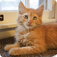 Adopt A Pet :: Tango- Adoption Pending - Arlington, VA