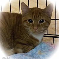 Adopt A Pet :: Boyd - Stafford, VA