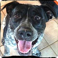 Adopt A Pet :: Reggie - Johnson City, TX