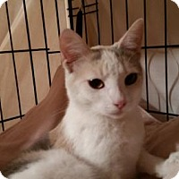 Adopt A Pet :: Lily - Whitewater, WI