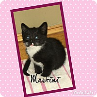 Adopt A Pet :: Martini - Mount Laurel, NJ