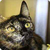 Adopt A Pet :: Ursa Major - Sarasota, FL