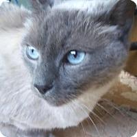 Adopt A Pet :: Mr. Squeeks - Davis, CA