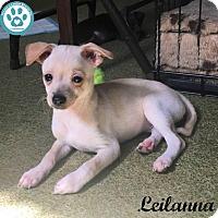 Adopt A Pet :: Leilanna - Kimberton, PA