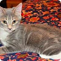 Adopt A Pet :: Emma - Buford, GA