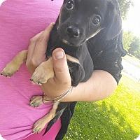 Adopt A Pet :: Pepper Jack - Alamosa, CO