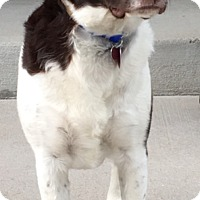 Adopt A Pet :: CO/Brody - Oroville, CA