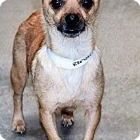 Adopt A Pet :: Jody - San Jacinto, CA